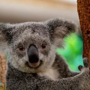 Marsupiaux et Paresseux
